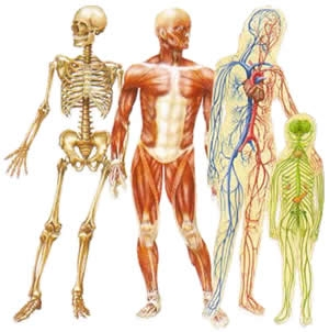 acupuncture-human-body