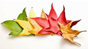season changes and your acupuncture treatments