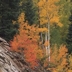 Durango Acupuncture Fall Health